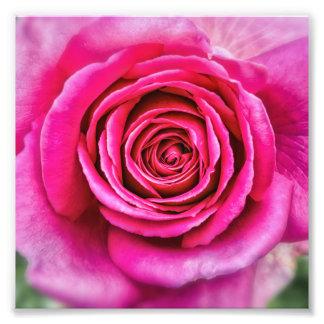 Rose de roses indien photos d'art