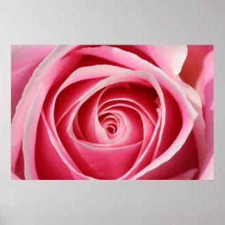 Rose foncé 01 de rose poster