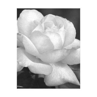 Rose noir et blanc dans toute sa beauté toiles