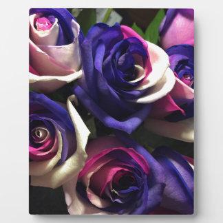 Roses de colorant de cravate : Blanc, rose, et Plaque Photo