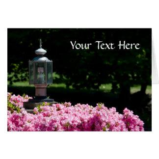 Roses et carte d'Eco-Lumière
