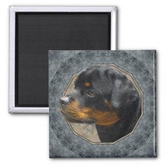 Rottweiler Magnet Carré