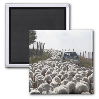 route de terres cultivables de la Toscane, voiture Magnet Carré