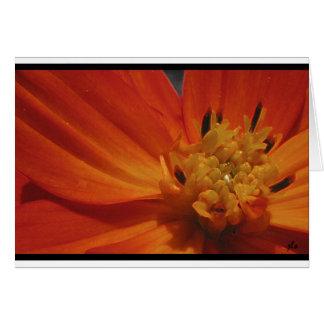 saisons :  carte pour notes de série de flore