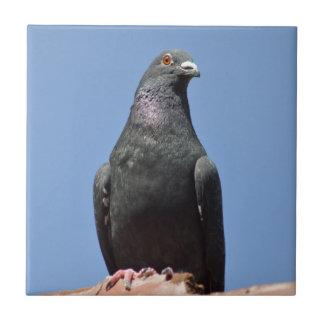 Sarclez le pigeon carreaux