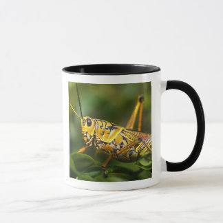 Sauterelle, marais parc national, la Floride, Mug