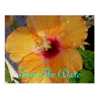 Sauvez la carte postale de ketmie de date