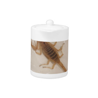 Scorpion d'écorce de l'Arizona