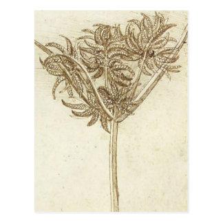Sedge.jpg par Leonardo da Vinci Carte Postale