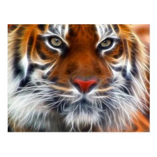 Seigneur des jungles indiennes, le tigre de cartes postales
