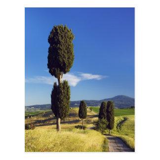 (sempervirens de cupressus) - l'Europe, Italie, Cartes Postales