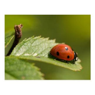 Sept-tache Ladybird Carte Postale