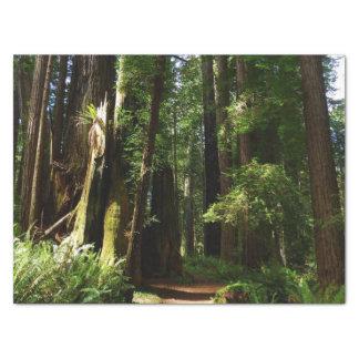 Séquoias et fougères au parc national de séquoia papier mousseline