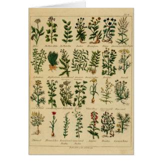 Série de fines herbes vintage de carte postale - 4