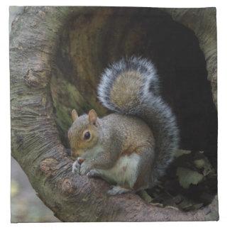 Serviettes de tissu d'écureuil