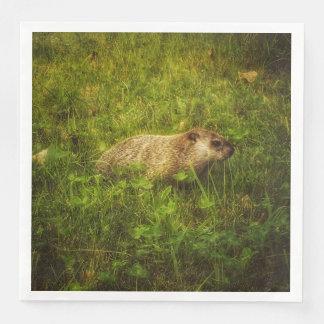 Serviettes Jetables Groundhog dans des serviettes d'un champ