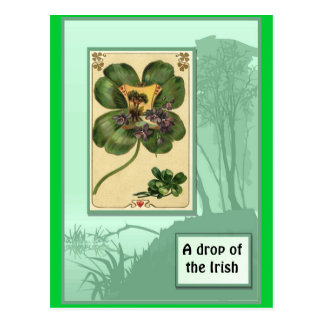 Shamrocks irlandais carte postale