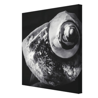 Shell noir et blanc a enveloppé la toile toiles