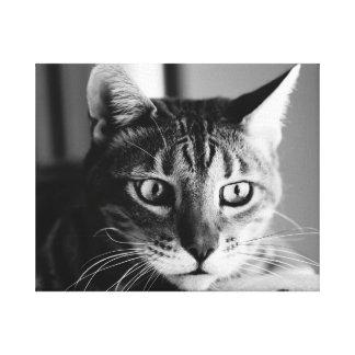 Shogun Bengal Cat Impressions Sur Toile