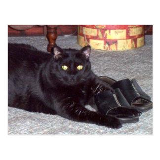 """""""Si la chaussure adapte"""" la carte postale de chat"""