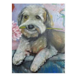 simpatia di un cane.jpg carte postale