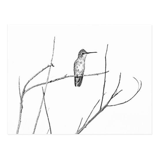 Simplement un colibri sur un bâton carte postale