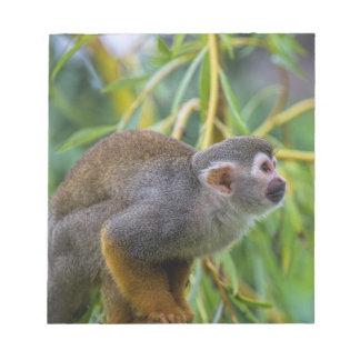 Singe-écureuil Bloc-note
