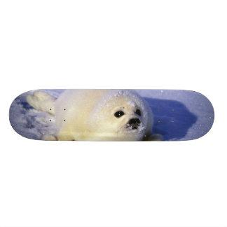 Skateboard 20,6 Cm L'Amérique du Nord, Canada, Golfe de St Lawrence.