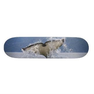 Skateboard 21,6 Cm Le Canada, Colombie-Britannique, île de Vancouver,