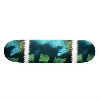 Skateboards Sous la planche à roulettes de lamantin de l'eau