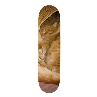Sommeil tigré orange dans le panier plateau de skateboard