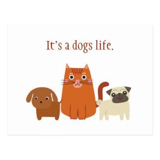 Son une vie de chiens, ou chats, carte postale
