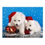 Spitz blanc de Pomeranian de chiots de Noël Cartes Postales