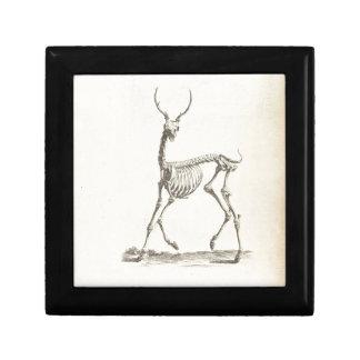 Squelette de cerfs communs de William Cheselden Coffrets Cadeaux