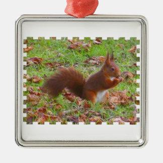 Squirrel - Ecureuil Ornement Carré Argenté