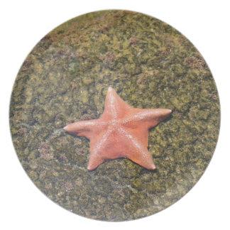 starfish.JPG vivant Assiette