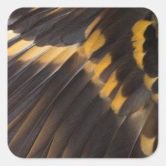 Sticker Carré Abrégé sur noir et jaune plume