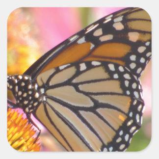 Sticker Carré Ailes en verre souillé