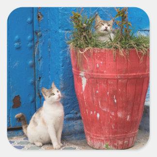 Sticker Carré Chats jouant autour, Rabat, Maroc
