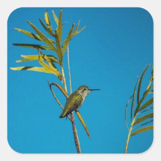 Sticker Carré Colibri femelle de rubis-gorge sur l'arbre