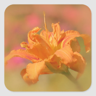 Sticker Carré Confiture d'oranges - Daylily