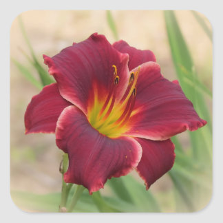 Sticker Carré Daylily inestimable