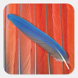 Sticker Carré D'écarlate d'ara de plume toujours la vie rouge