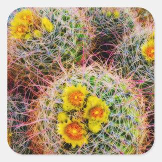 Sticker Carré Fin de cactus de baril, la Californie