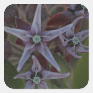Sticker Carré Fleur de Milkweed