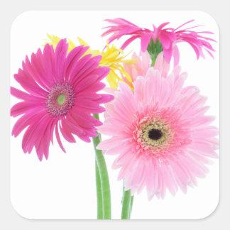 Sticker Carré Fleurs de marguerite de Gerbera