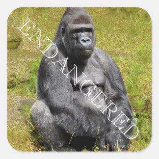 Sticker Carré Gorille de montagne
