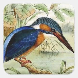 Sticker Carré Illustration vintage d'oiseau de martin-pêcheur