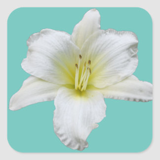 Sticker Carré Lis doux - Daylily