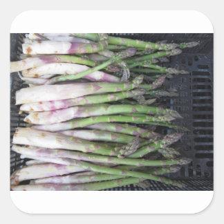 Sticker Carré Main fraîche d'asperge sélectionnée du jardin